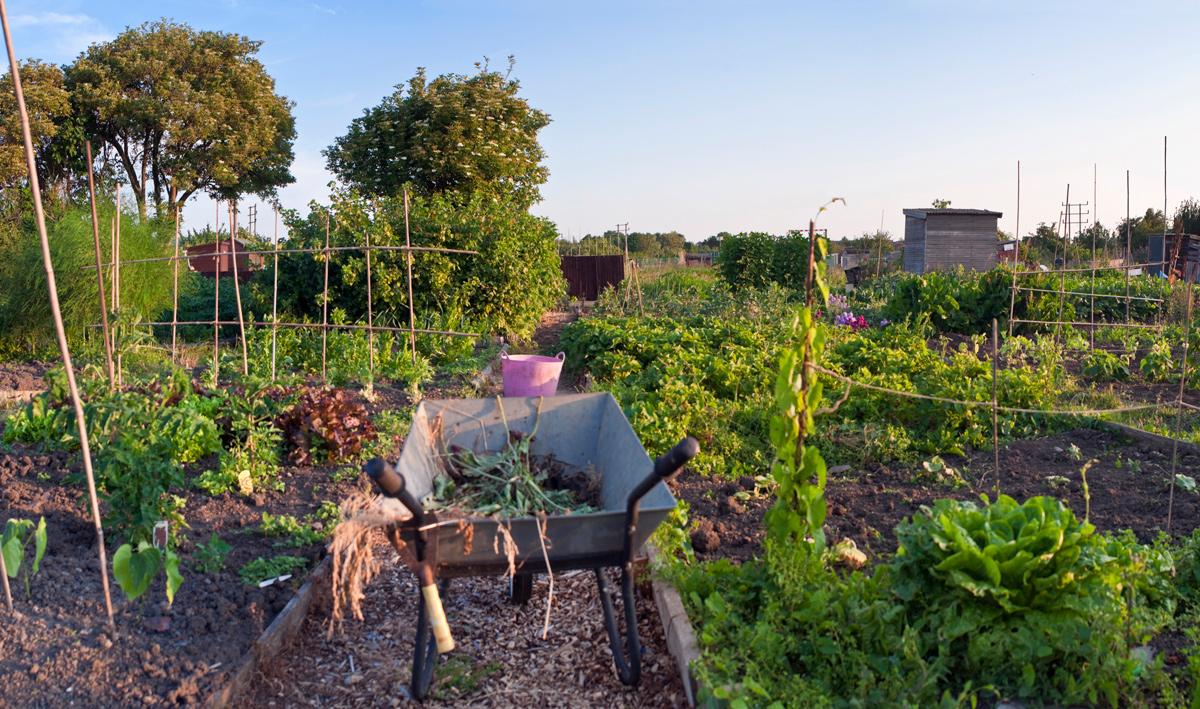Utilisation des jardins communautaires et alimentation bio for Jardin quebec