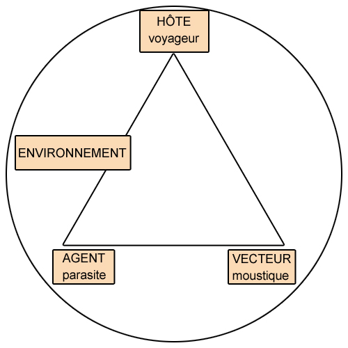 Illustration du triangle épidémiologique (ex. : paludisme)