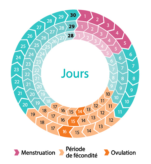 période fertilité femme